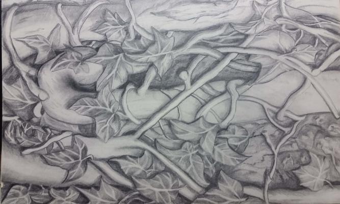 Zeichnung Efeu