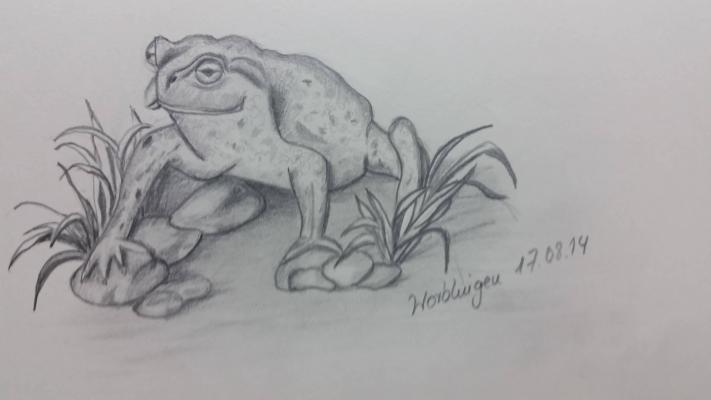 Frosch Grafit auf Papier
