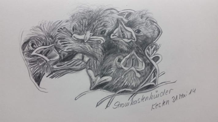 Stromkastenkinder in Kesten, Zeichnung